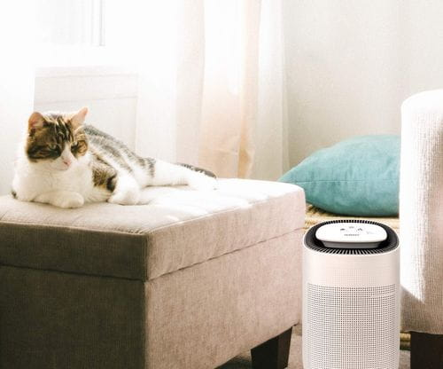 how dehumidifiers benefit our pets
